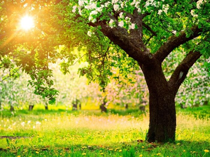 Sol brillante-dando-luz-a-los-arboles-frutales-