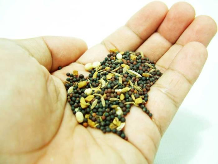las-semillas-2-PARA-WEB