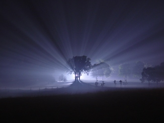 Fog_shine_sprayed_trees