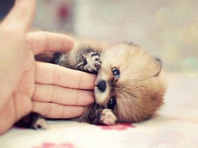 nuevas-imagenes-de-animales-hermosos-para-facebook-5